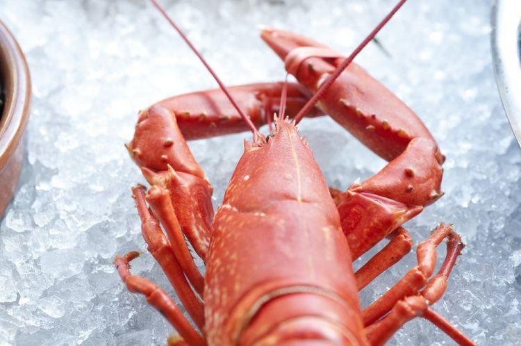 L-Abri-des-Flots-Dinard-homard