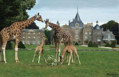 Au plus près des animaux au Zoo de la Bourbansais